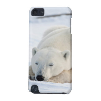 Polar Bear in winter iPod Touch 5G Cover