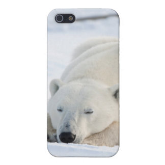 Polar Bear in winter Covers For iPhone 5