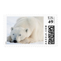 Polar Bear in winter Postage