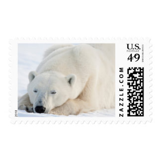Polar Bear in winter Stamp