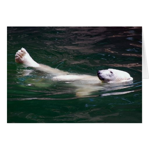 Polar bear just lazing greeting cards