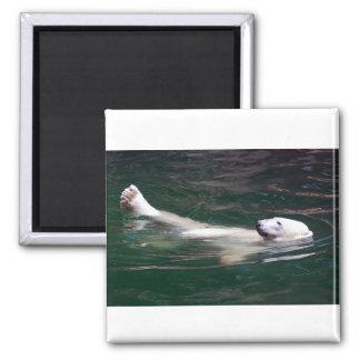 Polar bear just lazing magnets