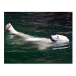 Polar bear just lazing post cards