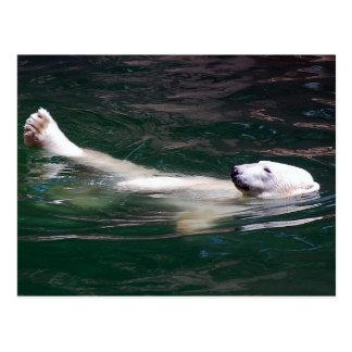 Polar bear just lazing postcard
