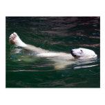 Polar bear just lazing postcards