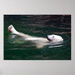Polar bear just lazing posters