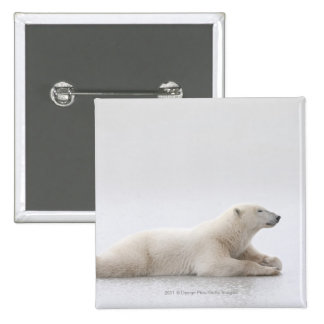 Polar Bear Laying On A Lake Of Ice Pinback Button