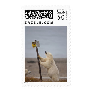 Polar bear leans on sign for buried pipe postage