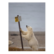 Polar bear leans on sign for buried pipe postcard