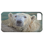 Polar Bear Lookin Cute iPhone 5C Cover