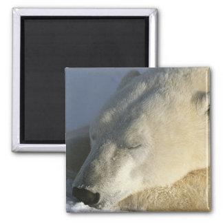 Polar Bear Refrigerator Magnet