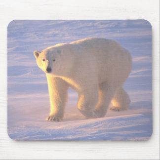 Polar Bear Morn 2 Mousepad Mousepads
