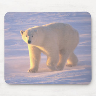 Polar Bear Morn 2 Mousepad