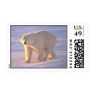 Polar Bear Morn 2 Postage Stamps