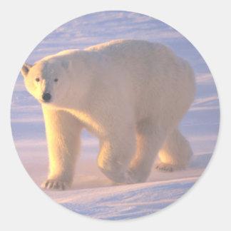 Polar Bear Morn 2 Classic Round Sticker
