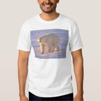 Polar Bear Morn 2 Tee Shirt