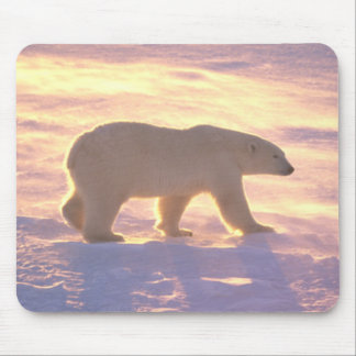 Polar Bear Morn 3 Mousepad