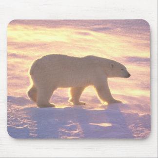Polar Bear Morn 3 Mousepad Mouse Pad