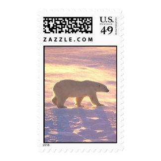 Polar Bear Morn 3 Postage Stamps