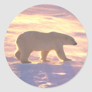 Polar Bear Morn 3 Stickers