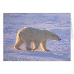 Polar Bear Morn Card Card