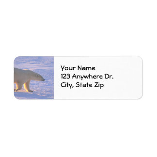 Polar Bear Morn Label