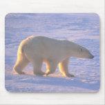 Polar Bear Morn Mousepad Mouse Pad