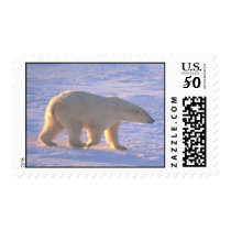 Polar Bear Morn Postage