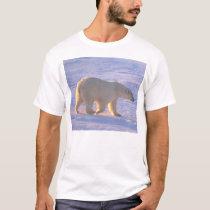 Polar Bear Morn T-Shirt