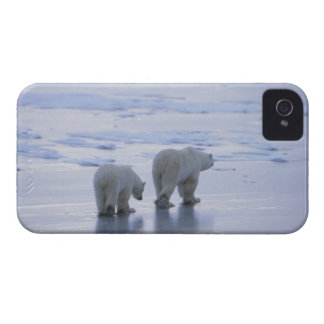 Polar Bear Mother and Cub iPhone 4 Case-Mate Case