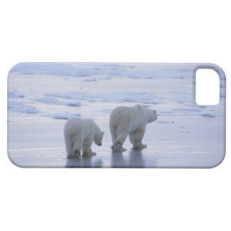 Polar Bear Mother and Cub iPhone SE/5/5s Case