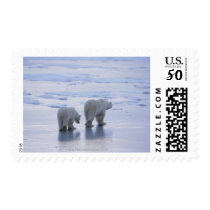 Polar Bear Mother and Cub Postage