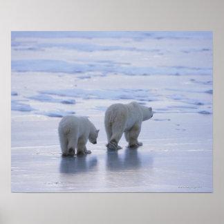 Polar Bear Mother and Cub Poster