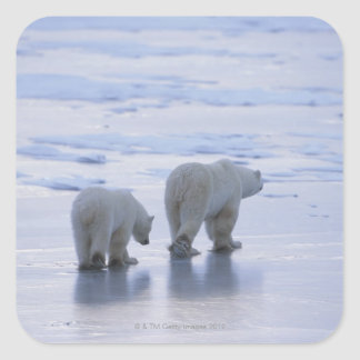 Polar Bear Mother and Cub Square Sticker