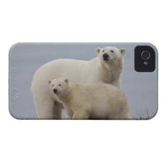 Polar bear mother and her cub rest in the tundra blackberry case