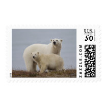 Polar bear mother and her cub rest in the tundra postage