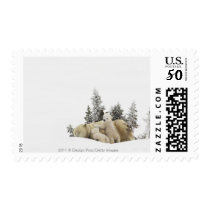 Polar Bear Mother And Her Cubs in Wapusk Park Postage