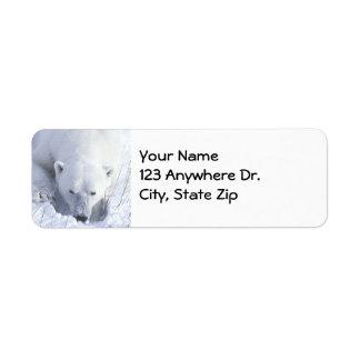 Polar Bear Nap Label