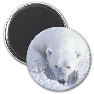 Polar Bear Nap Magnet