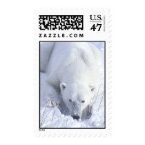 Polar Bear Nap Postage