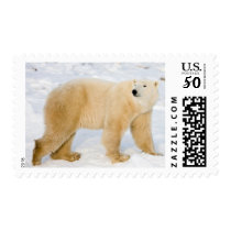 Polar Bear near Hudson Bay 2 Postage
