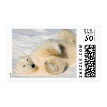 Polar Bear near Hudson Bay Postage