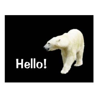 Polar Bear on Black Hello Postcard