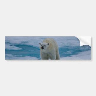 Polar Bear on pack ice Bumper Sticker