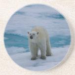 Polar Bear on pack ice Coasters