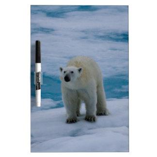 Polar Bear on pack ice Dry-Erase Boards