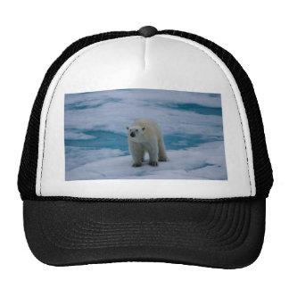 Polar Bear on pack ice Hats