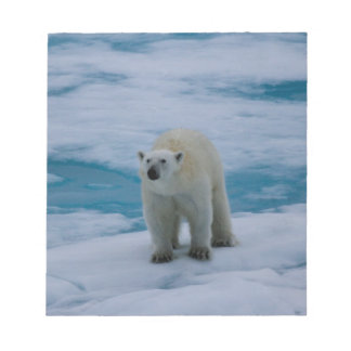 Polar Bear on pack ice Memo Note Pads