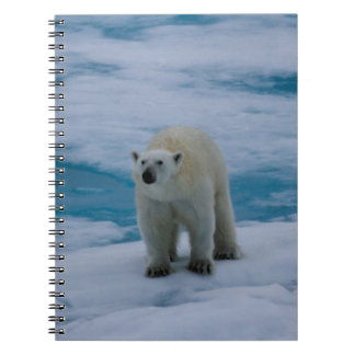 Polar Bear on pack ice Spiral Note Book