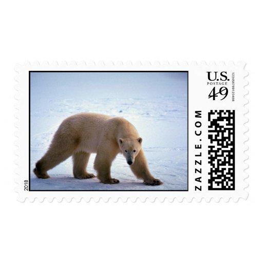 Polar Bear on snow Postage Stamp